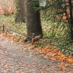Eichhörnchen im Park Foto: Silke Böttcher