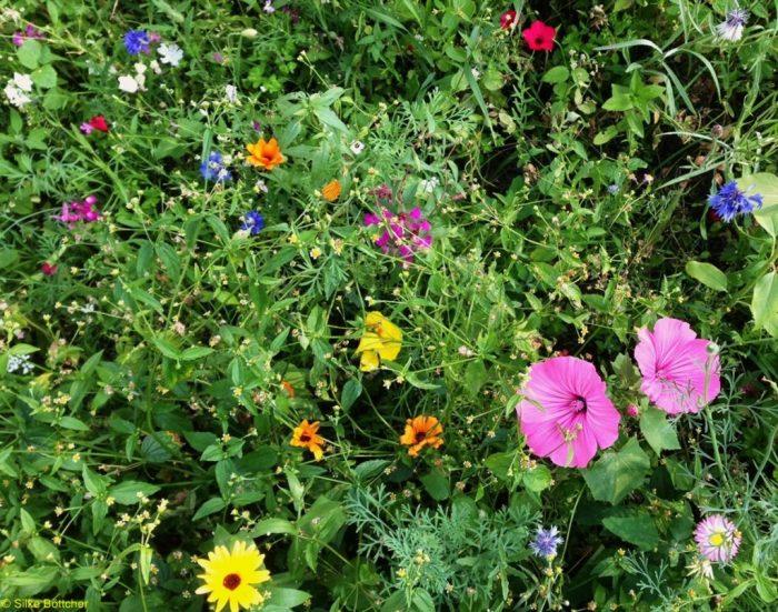 Sommerwiese Foto: Silke Böttcher