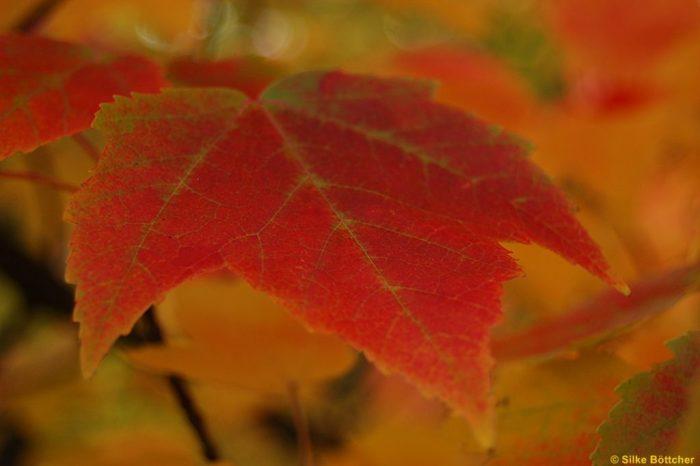 Herbstverfärbung